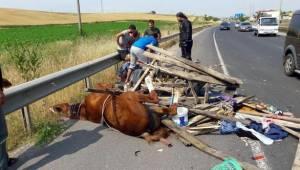 Çorlu'da Kamyon At Arabasına Çarptı 3 Yaralı