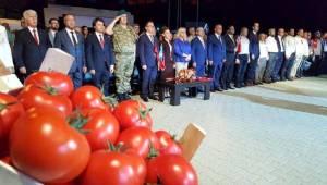 Kosova'da Domates Festivali...