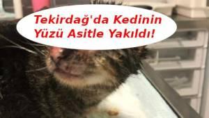 Tekirdağ'da Malkara'da Üzerine Asit Dökülen Yavru Kedi Tedavi Ediliyor | Son Dakika Tekirdağ Haber