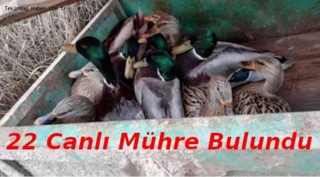 Canlı Mühre Olarak Kullanılan Yaban Ördeklerine El Konuldu - Tekirdağ Haberler