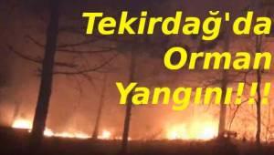 Tekirdağ'da Orman Yangını Korkuttu! Tekirdağ Orman Yangınına İlk Müdahale