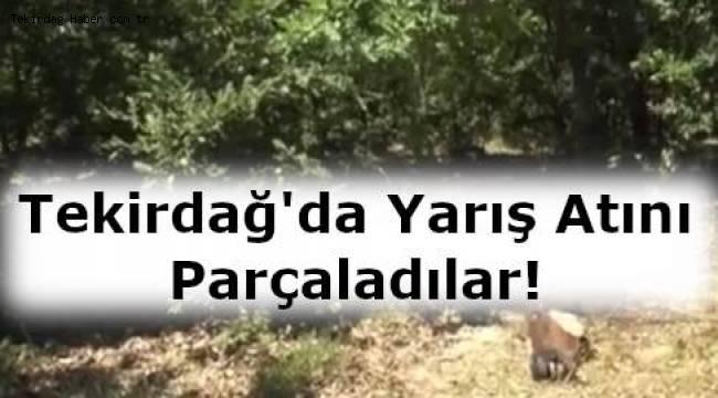 Tekirdağ Çerkezköy'de Yarış Atını Kesip Parçaladılar