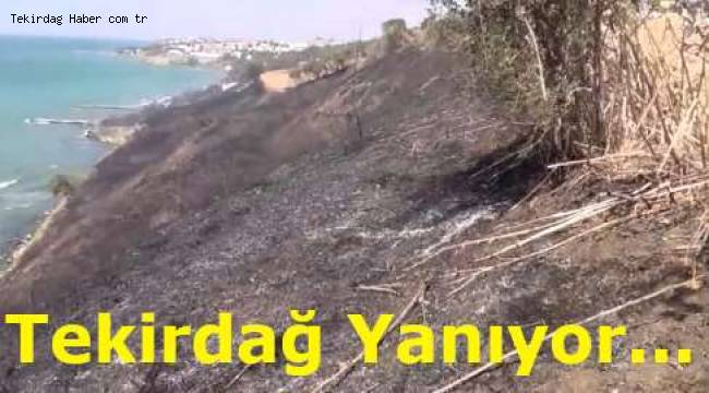 Tekirdağ'da Korkutan Yangını! Tekirdağ Merkez İlçe Süleymanpaşa'da 100 Dönümlük Alanı Yandı