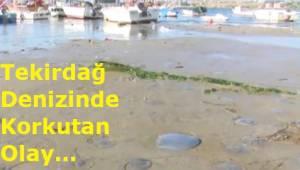 Tekirdağ Denizinde Korkutan Manzara! Tekirdağ'da Neler Oluyor? Son Dakika Açıklamaları