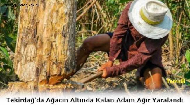 Tekirdağ Malkara'da Üzerine Ağaç Devrilen Adam Ağır Yaralandı