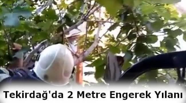 Tekirdağ'da 2 Metrelik Zehirli Engerek Yılanı Korkuttu